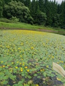今日の北竜湖
